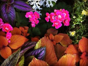 colourful leaves and flowers